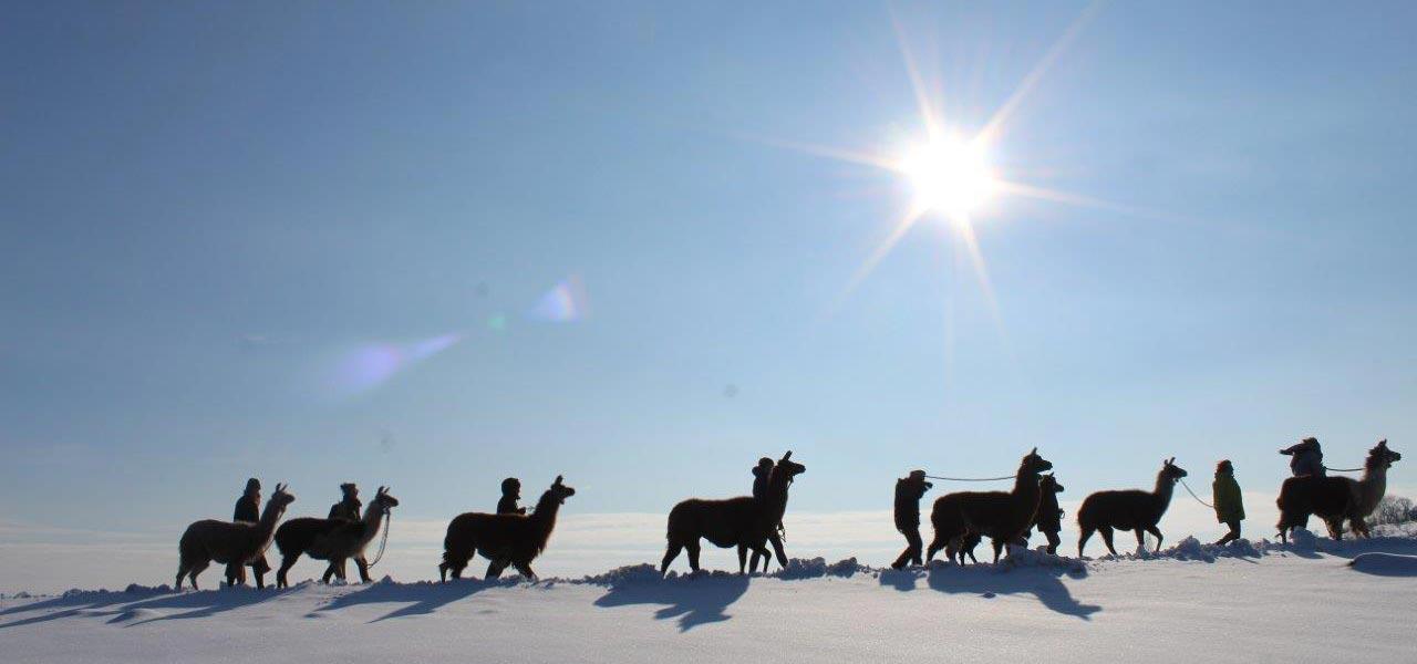 lama_winterwanderung